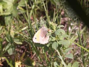 ispina-25-maja-2012-063